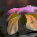 La mia primavera / grande felicità / coi fiori di campo  #Haiku